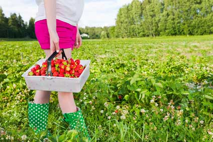 Fruit-picking : faire la récolte